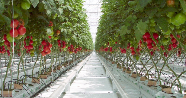 04-zs-greenhouses_303-ab